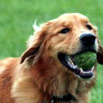 Best Holistic Dog Food Brands