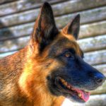 What is the best dry dog food for German Shepherds allergies
